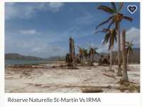 After Irma Participate In The Restoration Of The Last Natural Sites in Saint Martin