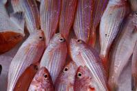 Le marché aux poissons reste ouvert à Marigot